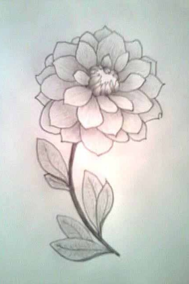 Pictures of how to draw flowers